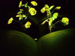 Нанотехнології дозволять перетворити рослини в ліхтарі