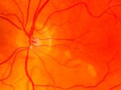 Учені довели, що генна терапія відновлює зір