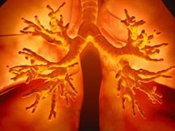 Учені створили штучні легені з кровоносною системою